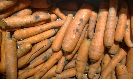 morcovi la billa romania