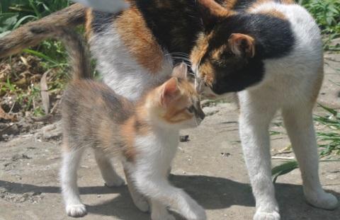 pisica si pui de afara