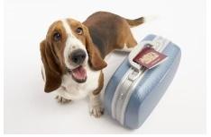 caine valiza transport calatorie